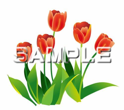春の花-チューリップのイラスト