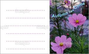 秋のメッセージカード コスモス