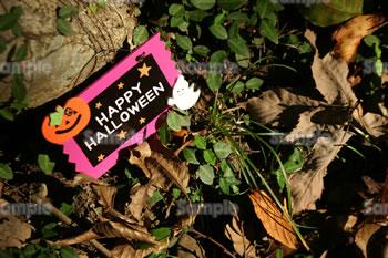 ハロウィンの写真(かぼちゃ・お化け)